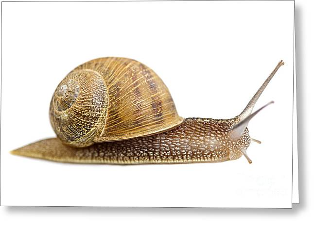 Helix Photographs Greeting Cards - Snail Greeting Card by Elena Elisseeva