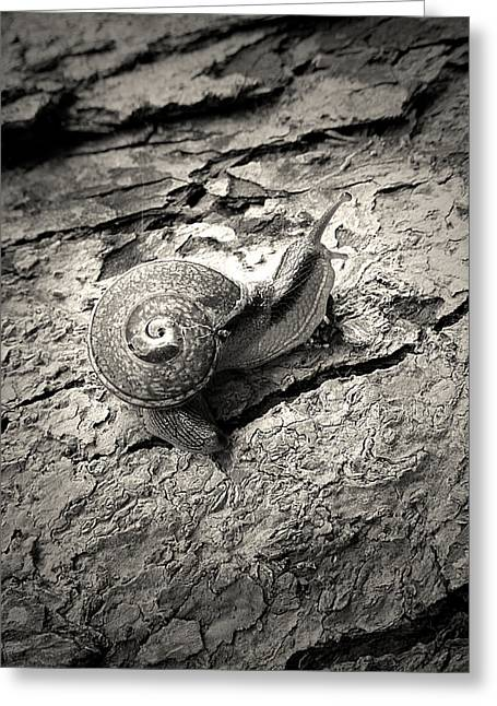 Book Cover Pyrography Greeting Cards - Snail Greeting Card by Girish J