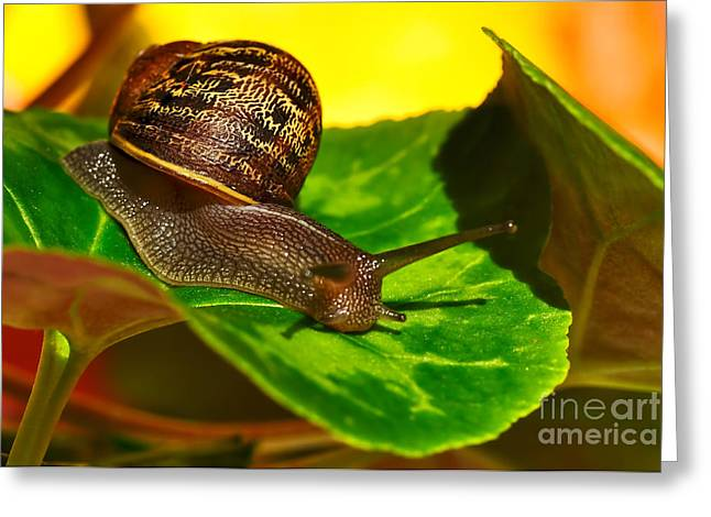 Shell Texture Greeting Cards - Snail in Colorful Habitat Greeting Card by Kaye Menner