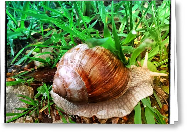 Helix Greeting Cards - Snail in the Wood Greeting Card by Regina Koch