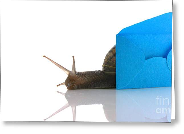 Email Greeting Cards - Snail next to miniature mail envelope Greeting Card by Simon Bratt Photography LRPS