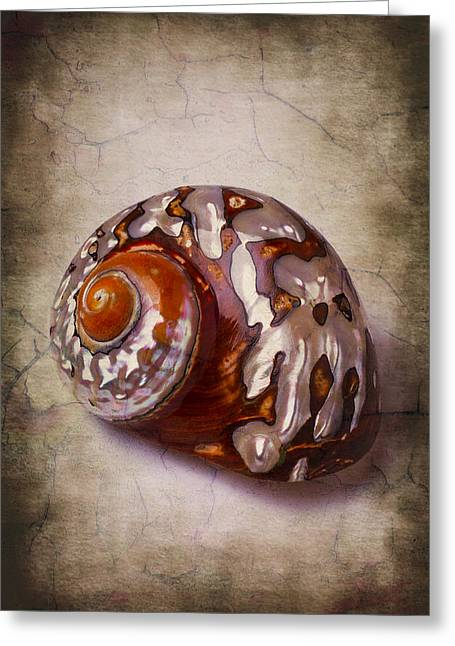 Snail Sea Shell 3 Greeting Card by Garry Gay