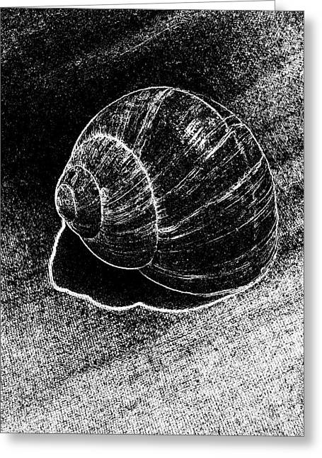Dotted Shells Greeting Cards - Snail Shell Black and White Art No.11 Greeting Card by Drinka Mercep