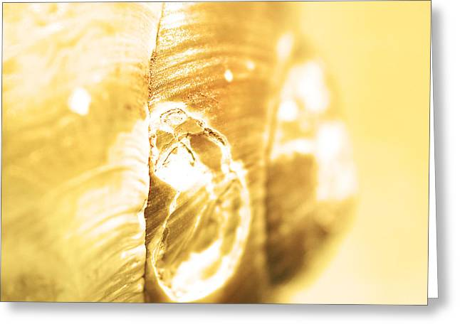 Helix Greeting Cards - Snail shell in yellow tone Greeting Card by Toppart Sweden