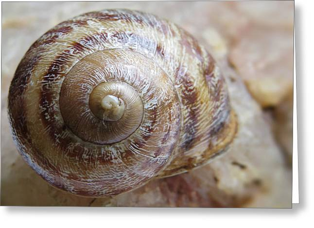 Invertebrates Greeting Cards - Snail Shell - Natural Nature Canvas Greeting Card by Ella Kaye Dickey