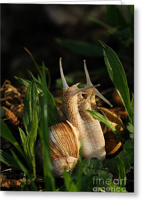 Burgundy Greeting Cards - Snails Mating Greeting Card by Reiner Bernhardt