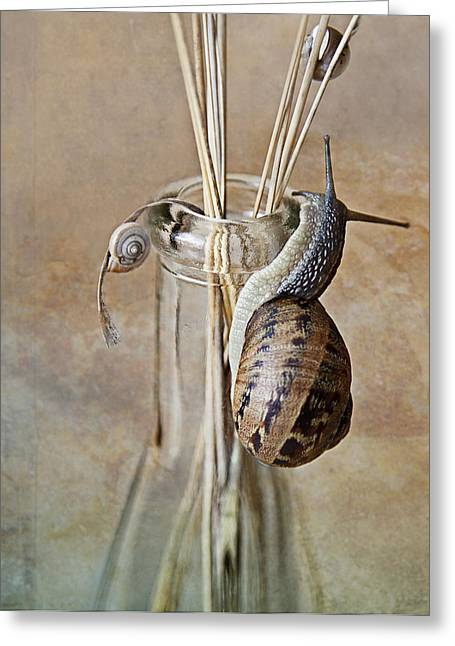 Shot Glass Greeting Cards - Snails Greeting Card by Nailia Schwarz