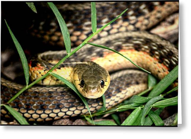 Reptiles Pyrography Greeting Cards - Snake 5 Greeting Card by Jeffrey Platt