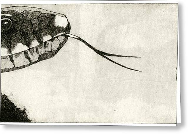 Sienna Greeting Cards - Snake And Salamander - When There Is No Way Forward  - Prey System - Food Chain - Etching Series Greeting Card by Urft Valley Art