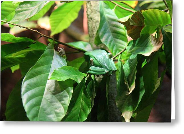 Snake Greeting Cards - Snake - National Aquarium in Baltimore MD - 12122 Greeting Card by DC Photographer