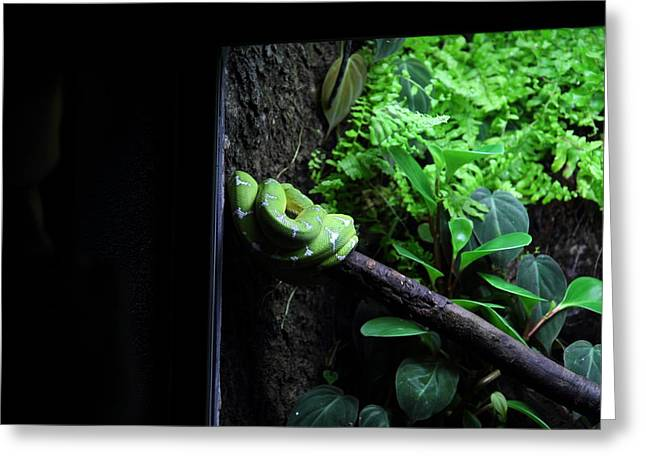 Snakes Greeting Cards - Snake - National Aquarium in Baltimore MD - 12124 Greeting Card by DC Photographer