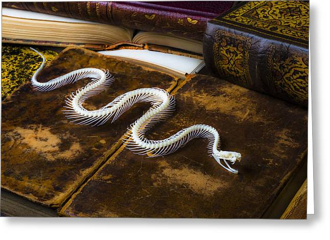 Bone Pile Greeting Cards - Snake skeleton and old books Greeting Card by Garry Gay
