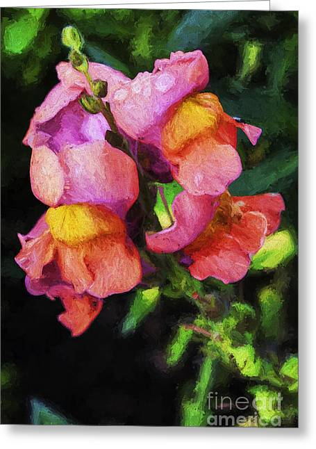 Snapdragons Greeting Cards - Snapdragon Greeting Card by Sheila Smart