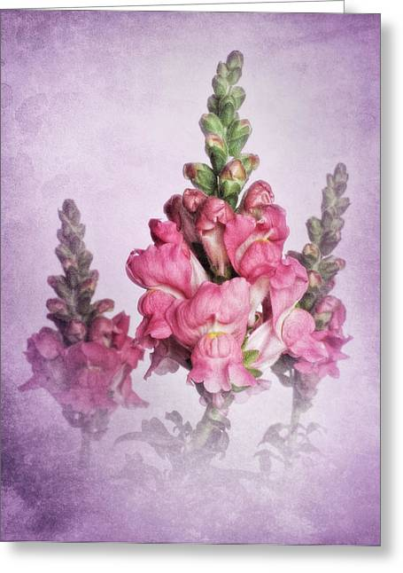 Snapdragons Greeting Cards - Snapdragon Trio Greeting Card by David and Carol Kelly