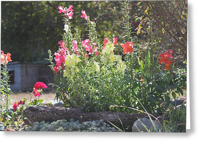 Doghouse Greeting Cards - Snapdragons and Old Doghouse Greeting Card by Ron McMath