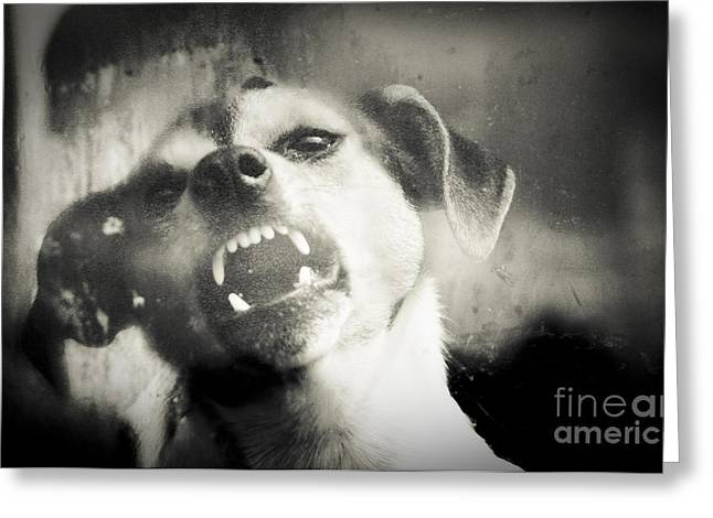 Growling Greeting Cards - Snarl Greeting Card by Alan Oliver