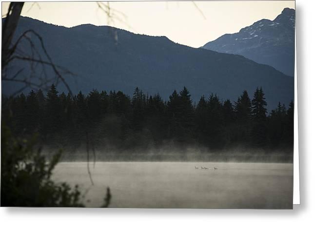 British Columbia Greeting Cards - Sneak Peak Greeting Card by Aaron S Bedell