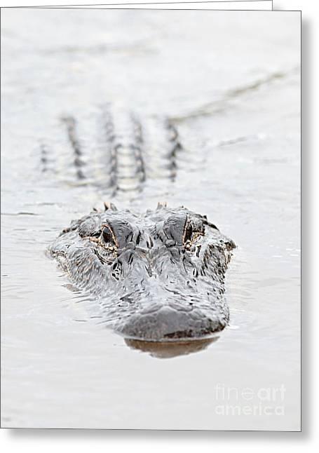 Sneaky Swamp Gator Greeting Card by Carol Groenen