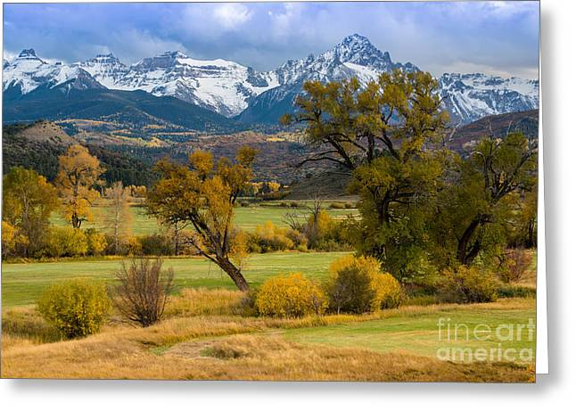 Grazing Snow Greeting Cards - Sneffels Fall Cattle Ranch - Ridgway - CO Greeting Card by Gary Whitton