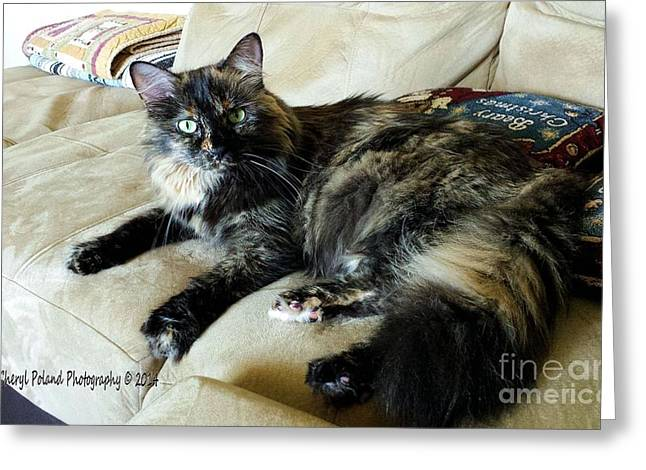 Photo Of Calico Cat Greeting Cards - Snickers Green Eyes Greeting Card by Cheryl Poland