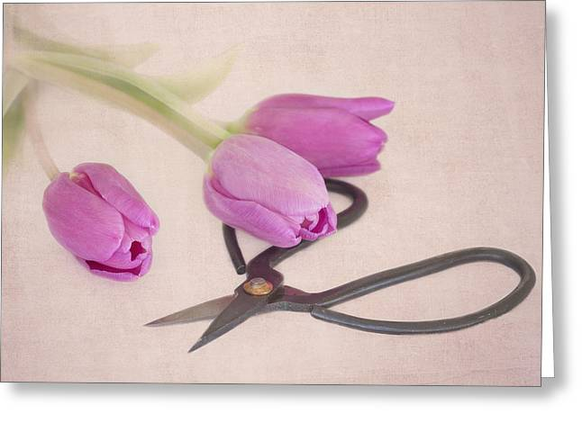Lilac Tulip Flower Greeting Cards - Snippets Greeting Card by Kim Hojnacki
