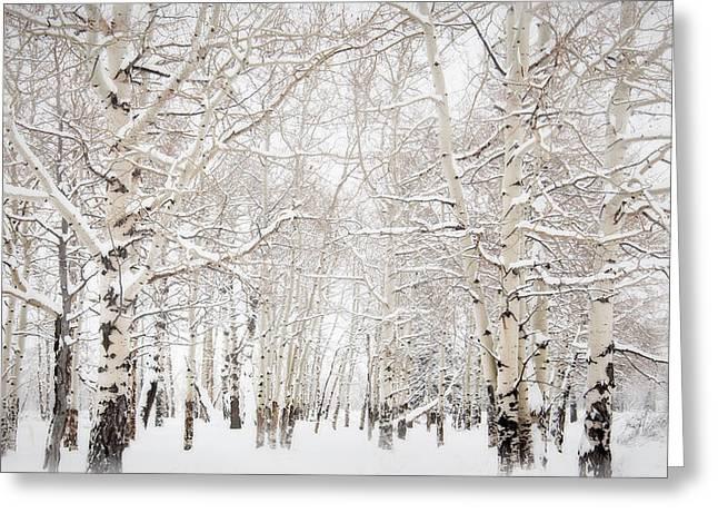 Vinter Greeting Cards - Sno Greeting Card by Rimantas Reuka