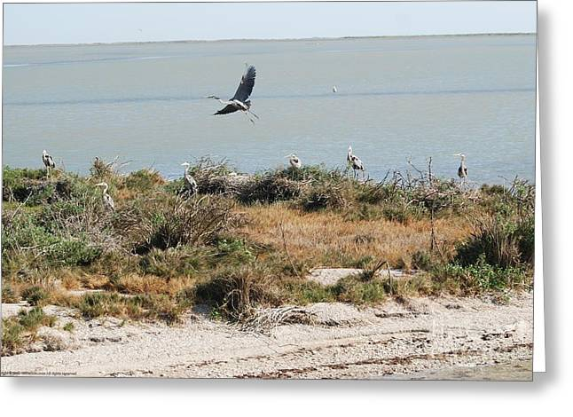 Great Neck Long Island Greeting Cards - SnoBirds Greeting Card by GD Rankin
