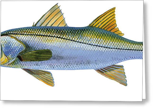 Mackerel Greeting Cards - Snook Greeting Card by Carey Chen