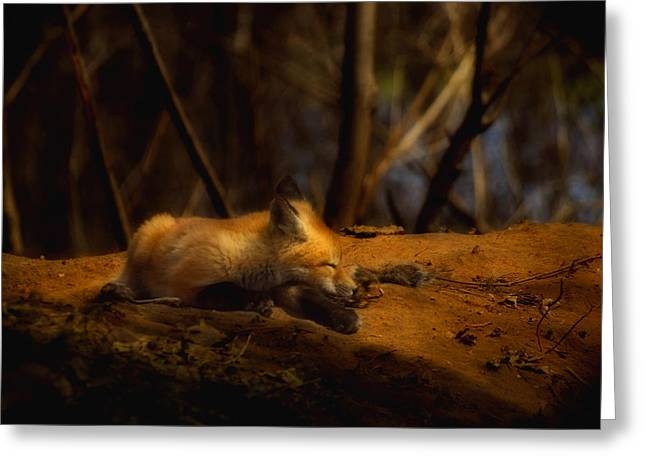 Snoozing Kit Fox Greeting Card by Thomas Young