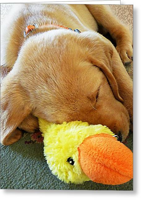 Cute Labradors Greeting Cards - Snoozing With My Duck Fell Asleep On A Job Puppy Greeting Card by Irina Sztukowski
