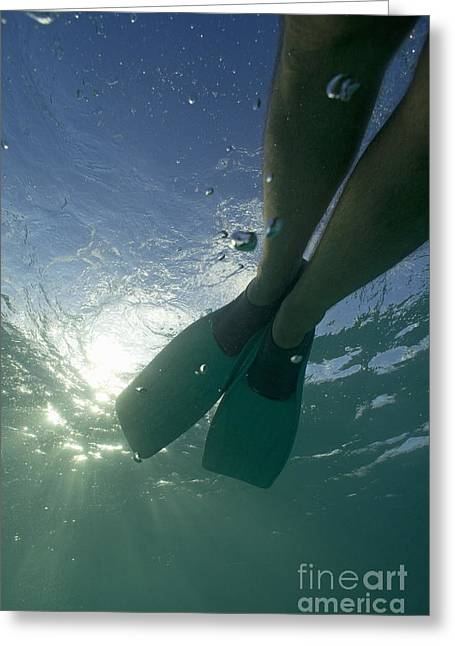 Snorkeller Legs With Flippers Underwater Greeting Card by Sami Sarkis