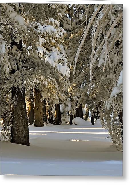 Morning In A Pine Forest Greeting Cards - Snow Alley Greeting Card by Maria Coulson
