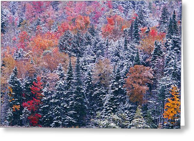 Plantlife Greeting Cards - Snow And Autumn Trees, Adirondack Greeting Card by Panoramic Images