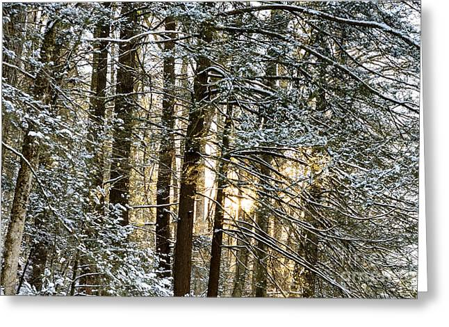 Allegheny Greeting Cards - Snow and Setting Sun Greeting Card by Thomas R Fletcher