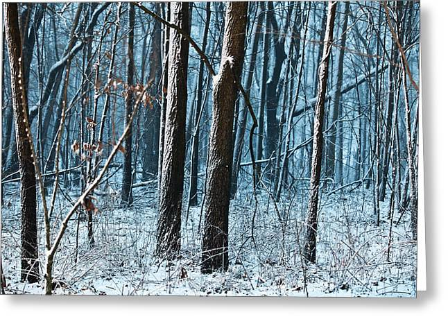 Tim Michael Greeting Cards - Snow at Dusk Greeting Card by Tim Michael