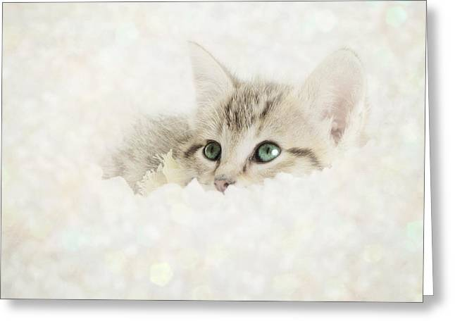 Kittens Greeting Cards - Snow Baby Greeting Card by Amy Tyler
