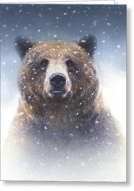 Kodiak Paintings Greeting Cards - Snow Bear Greeting Card by Robert Foster