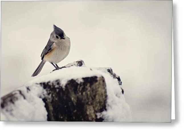 Amimal Greeting Cards - Snow Bird Greeting Card by Heather Applegate