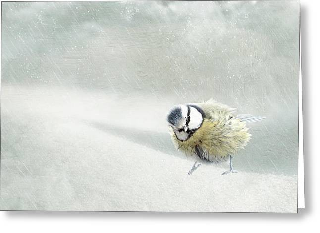 Feeding Mixed Media Greeting Cards - Snow Bird Greeting Card by Heike Hultsch