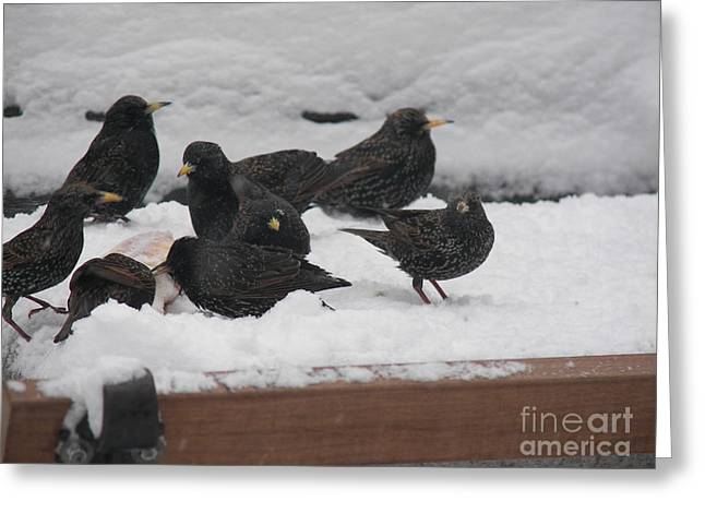 James Dolan Greeting Cards - Snow Birds Greeting Card by James Dolan