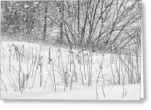 Drifting Snow Greeting Cards - Snow Blowing and Drifting Greeting Card by Chris Tobias