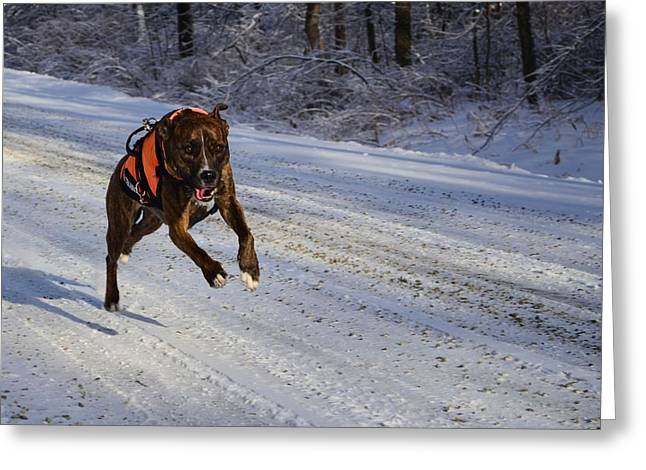 Dog At Play Greeting Cards - Snow Bound Greeting Card by Clay Chase