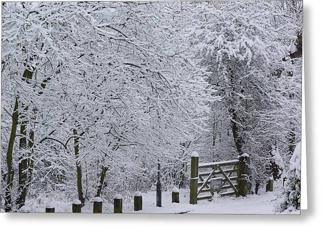 Snow Canopy Greeting Card by David Birchall