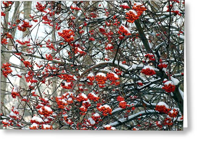 Okanagan Valley Greeting Cards - Snow- Capped Mountain Ash Berries Greeting Card by Will Borden