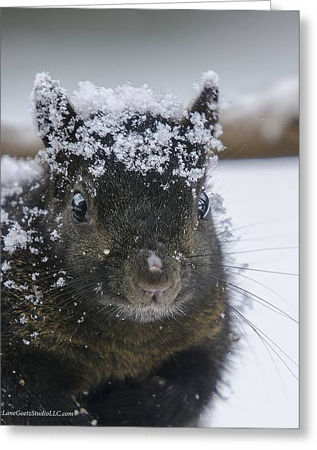 Wild Orchards Greeting Cards - Snow covered and Squirrel Greeting Card by LeeAnn McLaneGoetz McLaneGoetzStudioLLCcom