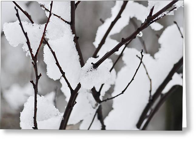 Snow covered branches Greeting Card by Elena Elisseeva