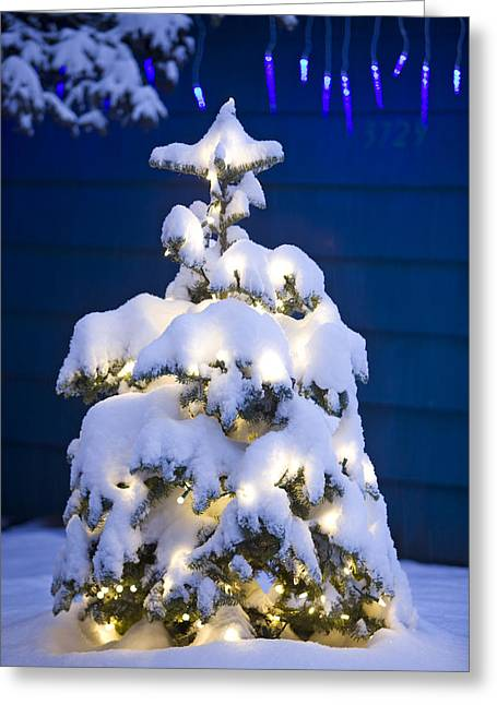Snowy Night Night Greeting Cards - Snow Covered Christmas Tree With White Greeting Card by Kevin Smith