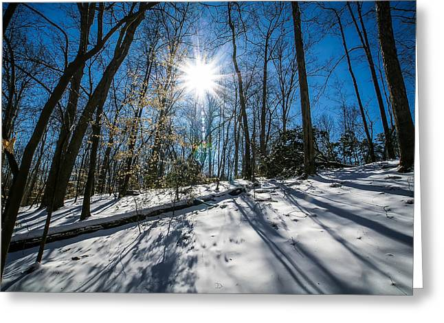 Snow Covered Forest Greeting Card by Alexandr Grichenko