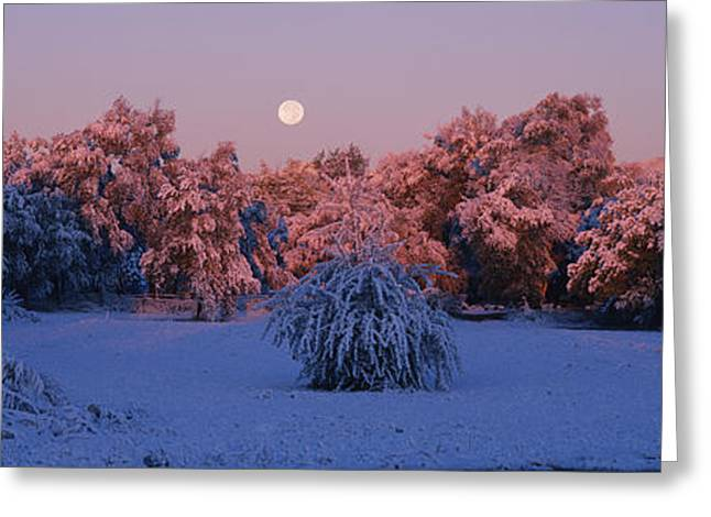 Snow Scene Landscape Greeting Cards - Snow Covered Forest At Dawn, Denver Greeting Card by Panoramic Images