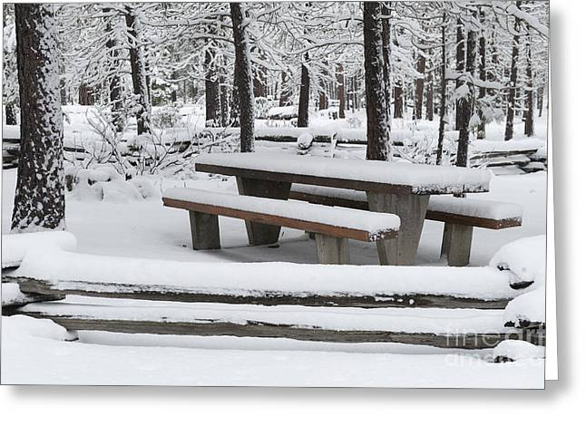 Snowstorm Greeting Cards - Snow Covered Forest Setting Greeting Card by John Shaw